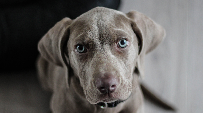 Is Your Dog More Emotionally Intelligent Than You?